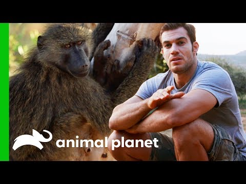 Evan Hangs Out With Baboons in the Kenyan Mountains   Evan Goes Wild