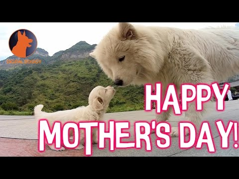 Happy Mother's Day from this Adorable Puppies Compilation