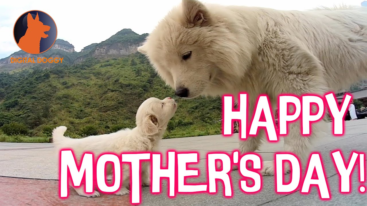 Image result for happy mothers day dog