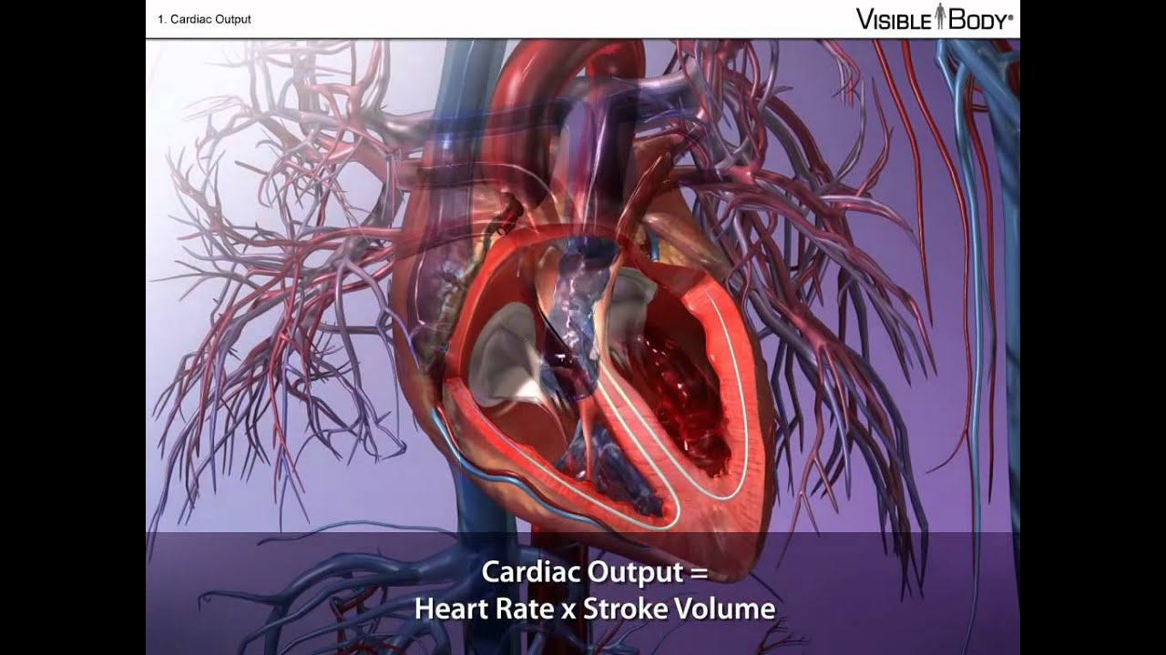 Cardiac Output And How To Calculate It