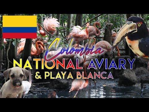 COLOMBIA'S AMAZING WILDLIFE & PLAYA BLANCA