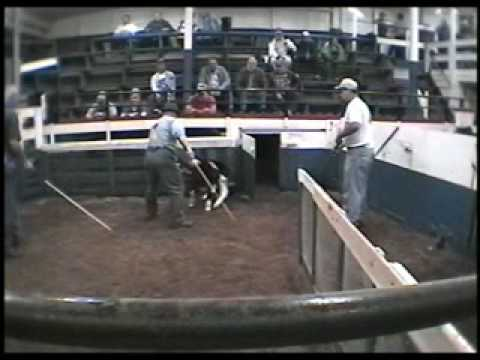 Livestock Auction Animal Cruelty Investigations