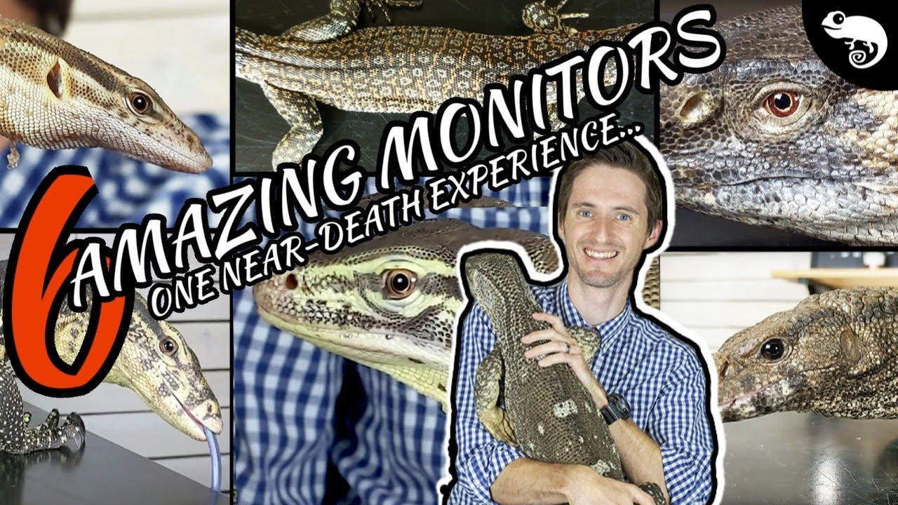 Six Of The Best Pet Monitor Lizards Youtube