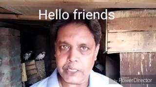 Pigeons... Kabootar k panjay 2....24-7-2018