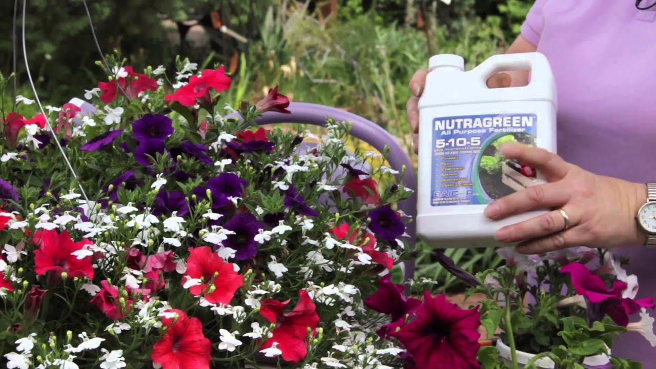 How to grow petunia from seeds - Growing Tips For Spreading Petunias Grow Guru
