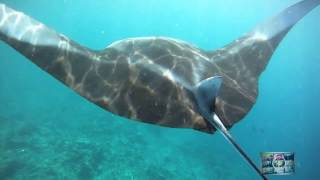 Diving With Manta Rays in The Maldives ...Amazing Video ! check it out