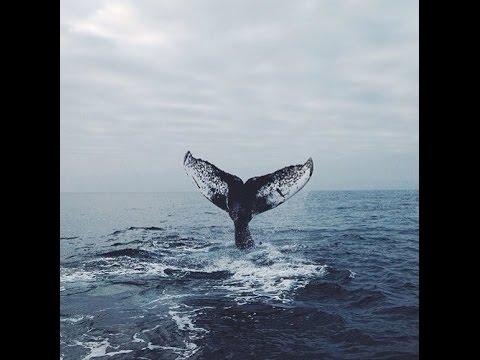 Вы видели, как умирают киты? Птицами