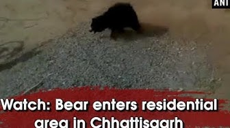 Watch: Bear enters residential area in Chhattisgarh - Chhattisgarh News