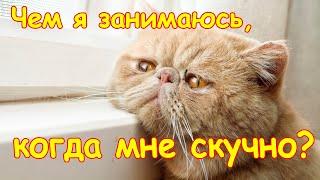 Мне скучно. Обзор безделушек. (01.20г.) Веселая Анюта (Бровченко).