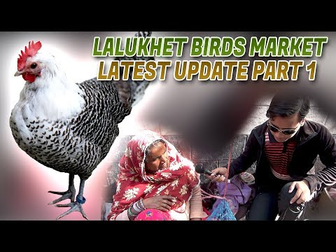 Lalukhet Birds Market 31-12-17 Latest Update Part 1 (Jamshed Asmi Informative Channel) In Urdu/Hindi