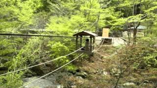 徳島市三好町の奥祖谷二重かずら橋には、かずら橋だけでなく、野猿もあ...