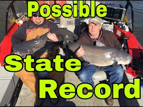 Possible STATE RECORD BLUE Catfish