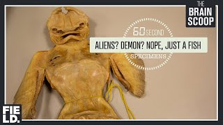 Aliens? Demon? Nope, it's just a fish. [60 Second Specimens]