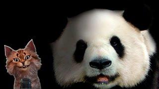 Наука для детей Животные | Панда | Семен Ученый