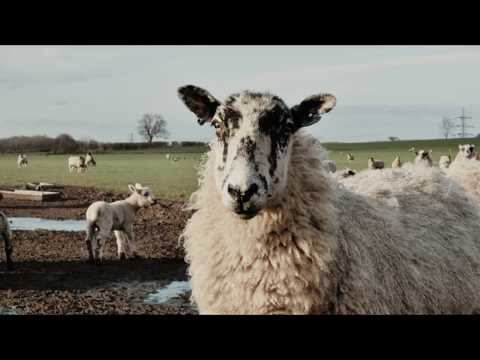 Animal Agriculture - Dialogues In Photography