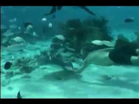 Cayman Islands Youtube