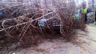 В Магнитогорске дерево раздавило машину приставов