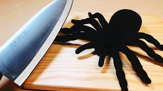 ストップモーションクッキング-クモを食べてみるASMR