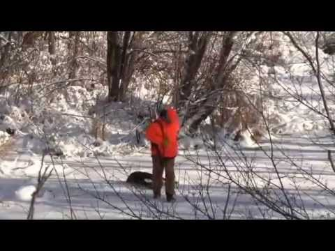 The Whitetail Obsession Episode #6 Wisconsin Deer Drives