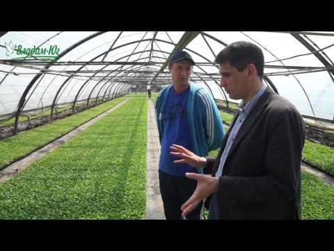 Сладкий перец Геркулес F1 перед высадкой в открытый грунт   овощеводство   фермерство   земледелие   вырастить   агрономия   капусты   капусту   семена   овощей   купить