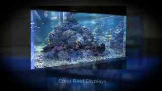 Custom Aquariums www.seaquaticaquariums.com