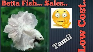 Home breed fighter(Betta)fish sales..(Tamil)