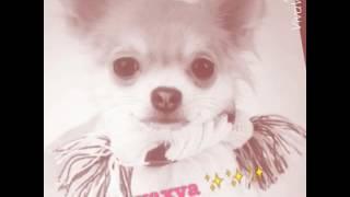 Топ пять самых маленьких и красивых пород собак 🐶🐶🐶🐶🐶🐶🐶🐶🐾🐾🐾🐾🐾🐾🐾🐾🐾🐾