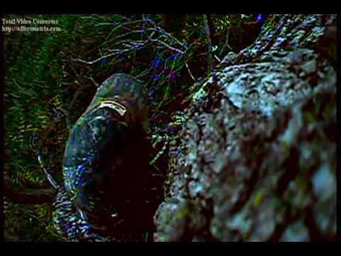 Охота на оленя video
