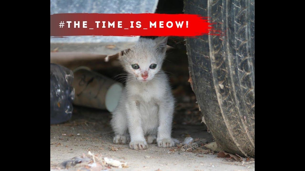 קמפיין למען חתולי הרחוב ~