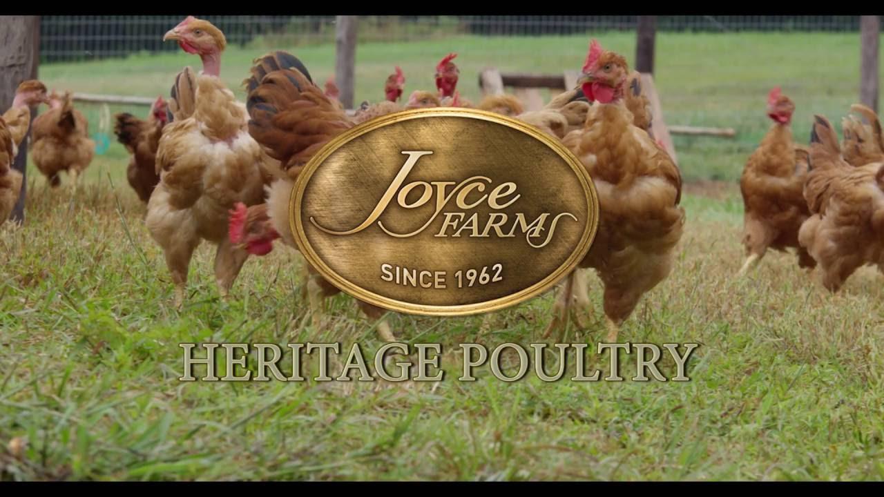 Heritage Poultry | Joyce Farms