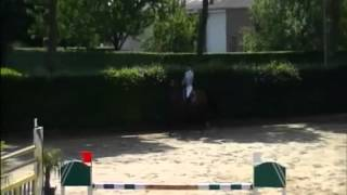 Celta Yar `Sporthorses from Holland` FOR SALE peter bulthuis