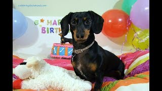 Crusoe's Birthday Celebration