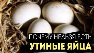 Почему старикам и детям нельзя есть утиные яйца