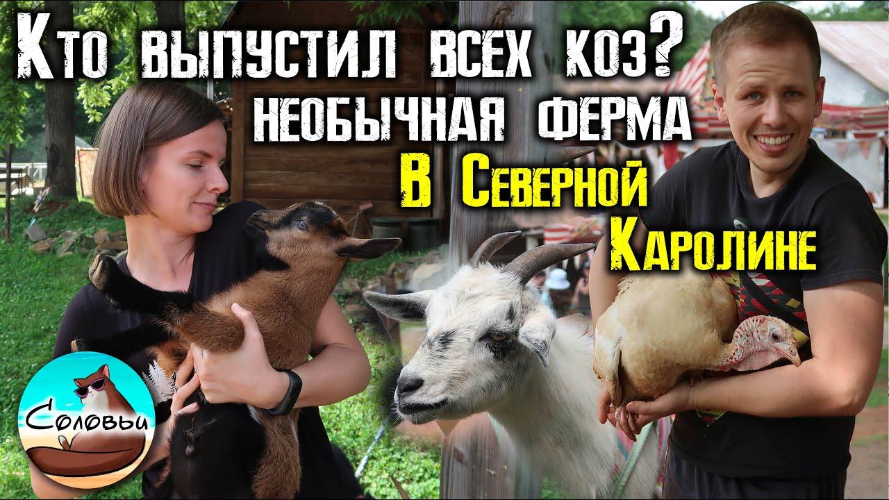 Необычная ферма в Северной Каролине / Кинотеатр с козами - вымысел или реальность?