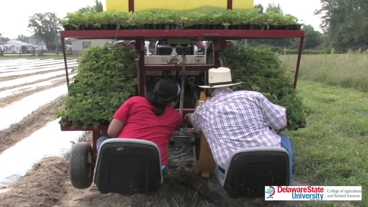 Water Wheel Planter