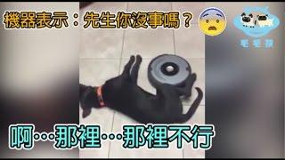 掃地機器人大戰貓狗!