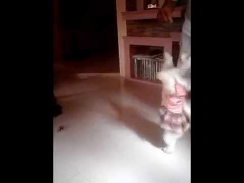 Dancing Vampee