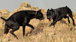 These Are 10 Most Fittest Dog Breeds