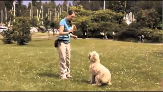 Dog Training Online - Free Sample Video Lesson