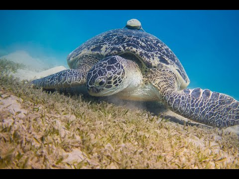 Snorkeling and diving the beautilful Comoros Island Moheli - Laka Lodge