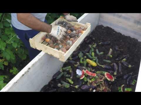 Кормление червей в червячнике фруктами и овощами. Как и чем кормить червей. Витамины для червей.