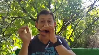 Growling  «рычание» на губной гармошке. Урок № 54