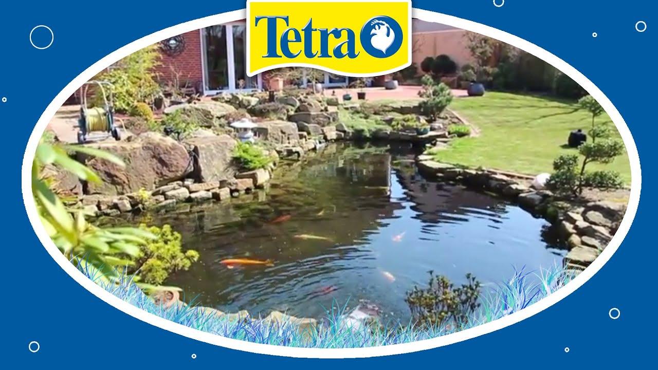 Plexiglas tv fishtube selbst bauen garden t pond for Goldfischteich bauen