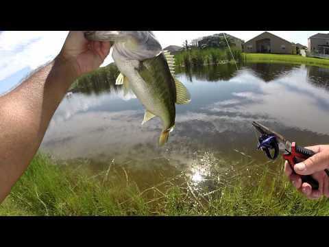 Backyard bass fishing youtube for Youtube bass fishing