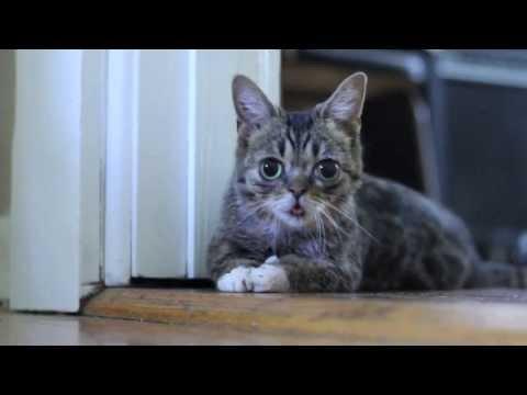 Lil Lil BUB - BUB as a Kitten.