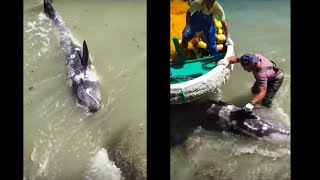 Terrified Dolphin Throws Himself At Ric O