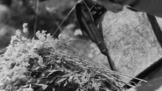 Смотреть клип Алёна Свиридова - Печальный Шура