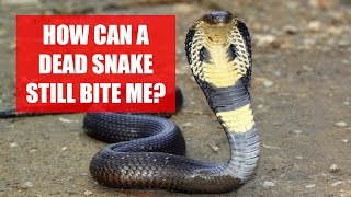 Can A Dead Snake Still Bite Me? Science Explains!
