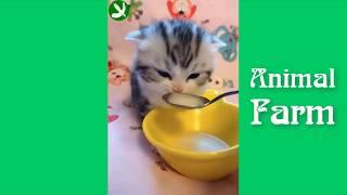 Приколы с котами. Смешные животные. Приколы #34
