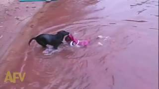 Animal Rescue- Dramatic Dog Rescue out of Flood Water